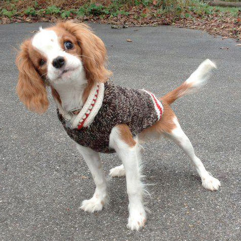 Boyfriend Wool Dog Sweater Designer Dog Clothes At
