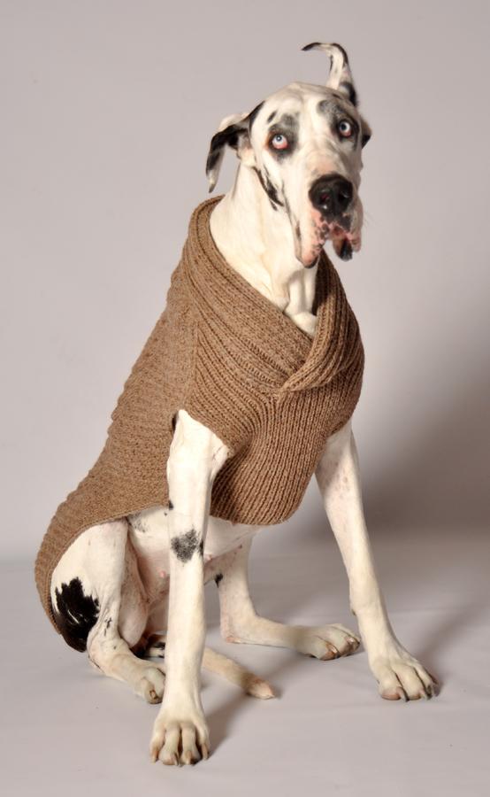 Knitting Pattern For Large Dog Jumper : Shawl Collar Ragg Wool Dog Sweater- Dog Clothes at Glamourmutt