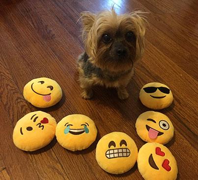 Squinty Tongue Emoji Dog Toy
