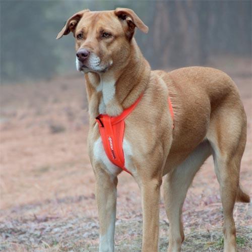 Reflective Ergonomic Dog Harness