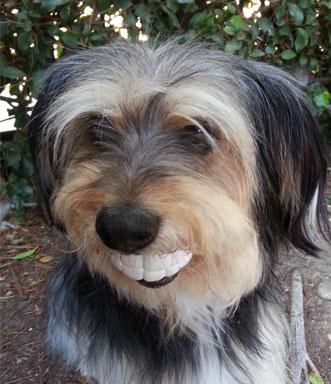 Moody Pet Humunga Chomp Dog Toy