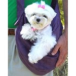 Cuddle Dog Carrier by Susan Lanci - Purple Luxe Suede