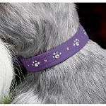 Swarovski Crystal Paws Dog Collar - 20 Colors