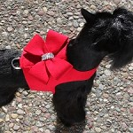Nouveau Bow Bailey Vest Dog Harness- 6 Colors