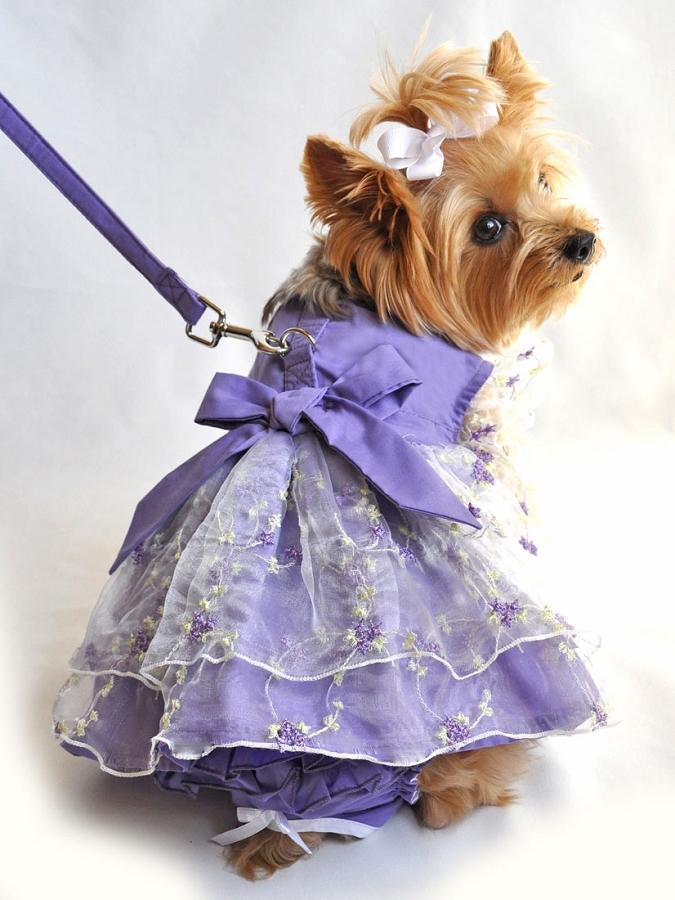 Lavender Provence Dog Dress At Glamourmutt Com