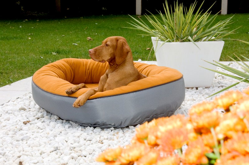 Bowsers Eco Orbit Dog Bed Dog Beds For Large Dogs At