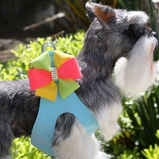 Angela Pinwheel Step-In Dog Harness