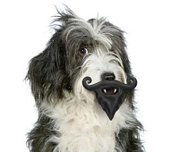 Mustache & Beard Dog Toy