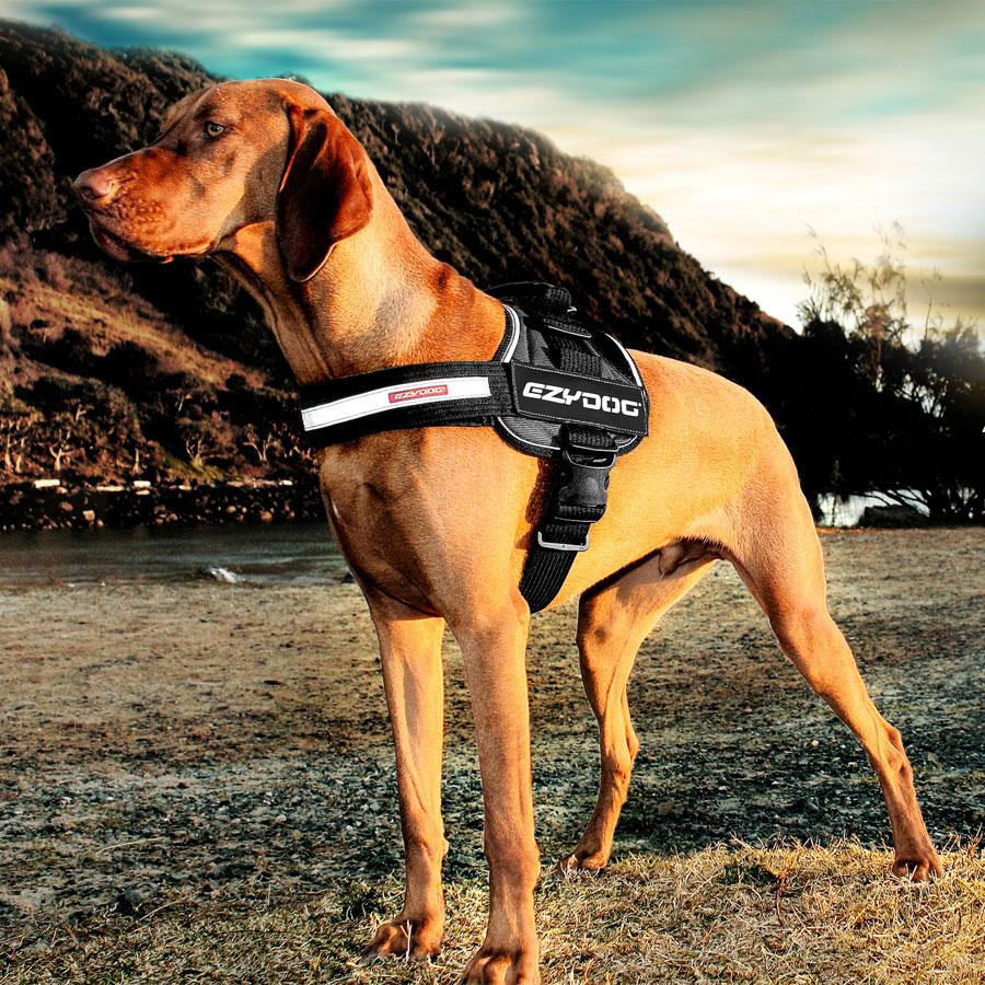 Big Dog Convert Harness by EzyDog