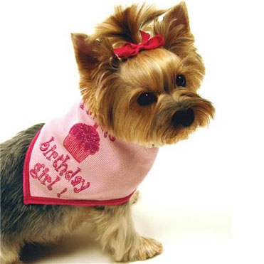 Birthday Girl Dog Scarf