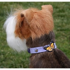 Butterfly Swarovski Crystal Dog Collar - 20 Colors
