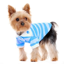 Classic Striped Dog Polo Shirt- Blue