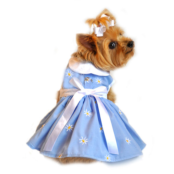 Daisy Bow Dog Dress Blue At Glamourmutt