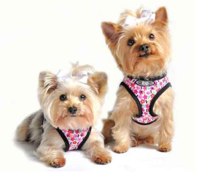 Glam Collars For Dogs