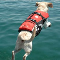 Deluxe Big Doggy Life Jacket by Ezydog