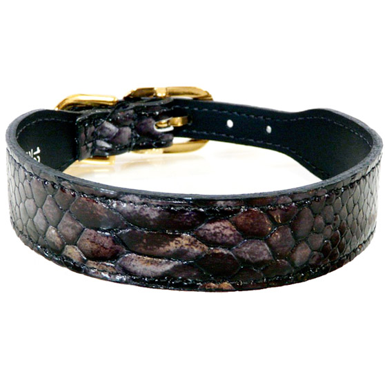 Snakeskin Italian Patent Designer Leather Dog Collar Charcoal- Unique Dog Collars at GlamourMutt.com