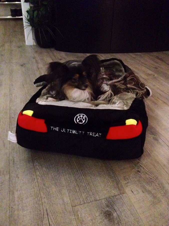 Dmw Sports Car Dog Bed Designer Puppy Boutique At