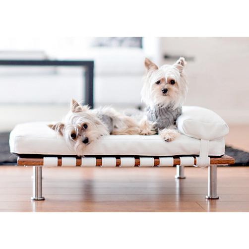 Elegant Ivy Modern Small Dog Day Bed Designer Dog Beds