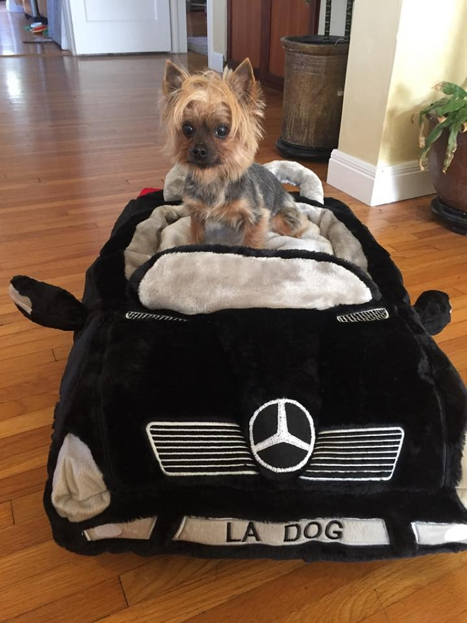 Furcedes Car Dog Bed Luxury Dog Boutique At Glamourmutt Com