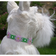 Gerber Daisies Swarovski Crystal Dog Collar - 20 Colors