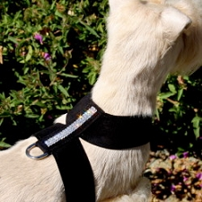 Giltmore Triple Row Swarovski Crystal Dog Harness - 20 Colors