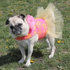 Grapefruit Tangerine Splash Dog Tutu Dress