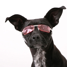 Doggles K9 Optix Dog Sunglasses - Pink