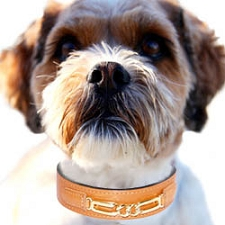 Central Park Leather Dog Collar - Tangerine