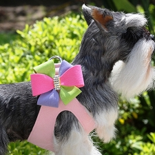 Madison Pinwheel Step-In Dog Harness