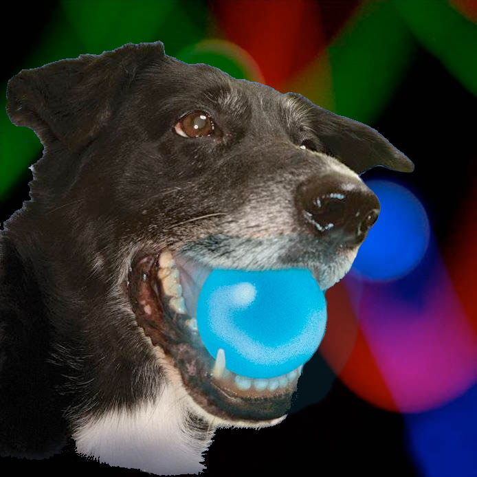 Meteorlight Led Glowing Dog Ball Toy Red Blue Green