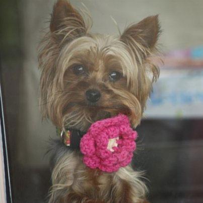 Mimi Green Lollipop Pink Dog Collar Flower Luxury Dog