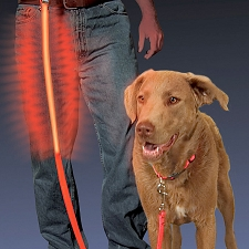 LED Night-Time Dog Leash