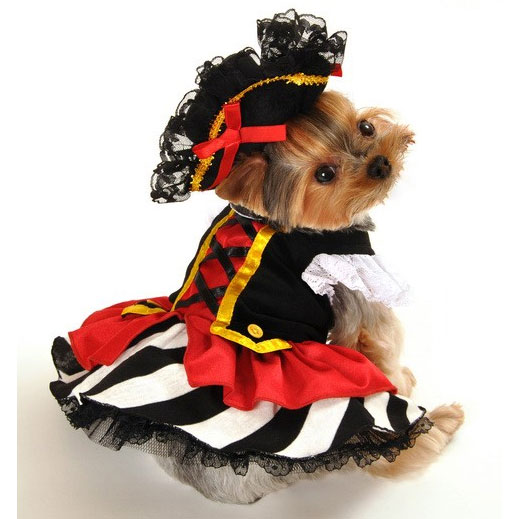 Pirate Wench Dog Costume | Halloween Costumes at GlamourMutt com