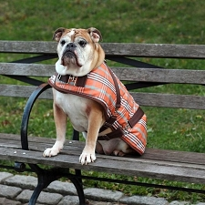 Plaid Horse Blanket Dog Coat- Orange