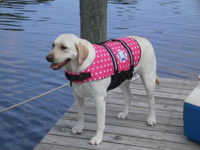pink dog life jacket