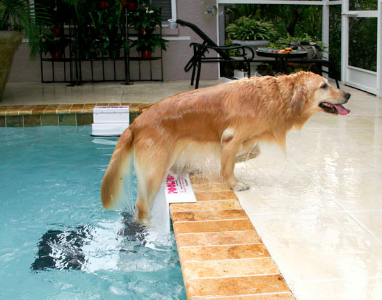 PoolPup Pool Steps for Dogs | Dog Accessories at GlamourMutt