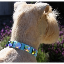 Private Collection Swarovski Crystal Dog Collar - 20 Colors