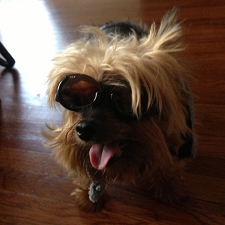 Racing Flames Doggles ILS Dog Sunglasses