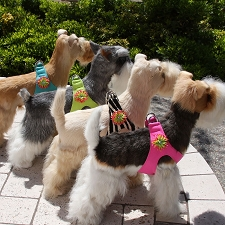 Sea Urchin Step-In Dog Harness- 20 Colors