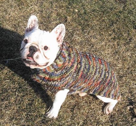 Shawl Collar Rainbow Wool Cable Knit Dog Sweater Dog