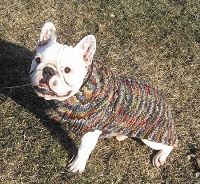 Shawl Collar Rainbow Wool Cable Knit Dog Sweater