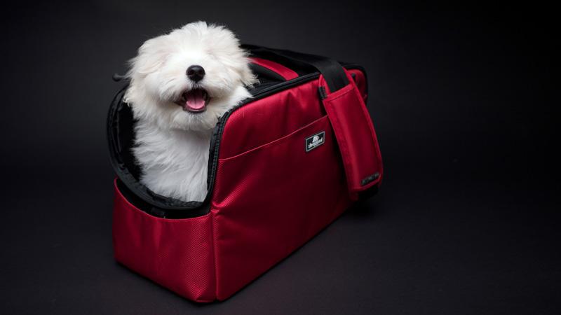 Sleepypod Dog Harness Australia