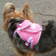 Sporty Mesh Dog Backpack- Pink