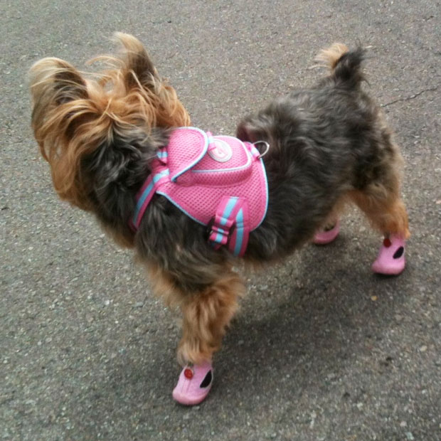 Sporty Mesh Dog Backpack Pink Cute Dog Clothes At