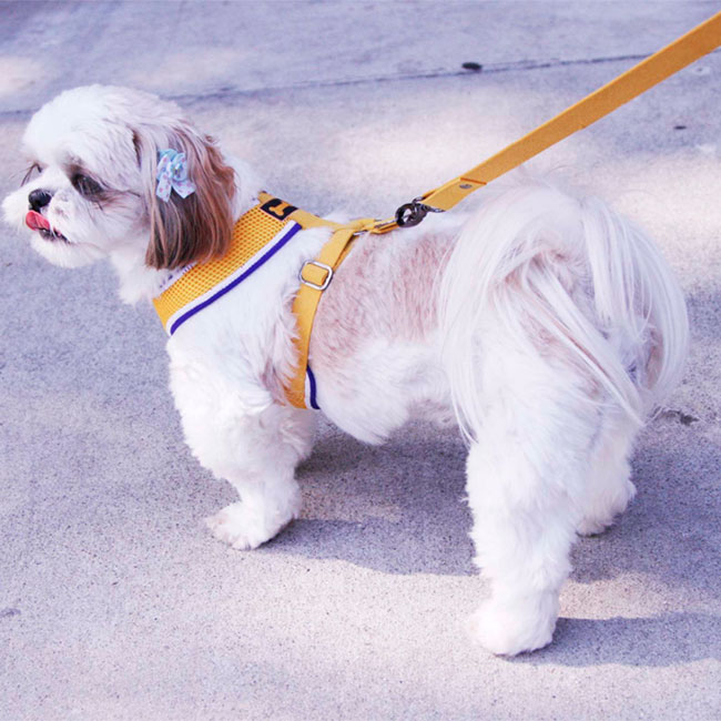 Sporty Mesh Dog Harness Yellow Designer Dog Boutique At
