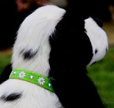 Swarovski Crystal Lil Daisy Dog Collar - 20 Colors