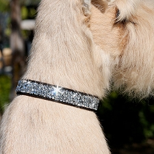 Crystal Rocks Ultrasuede Dog Collar - 20 Colors