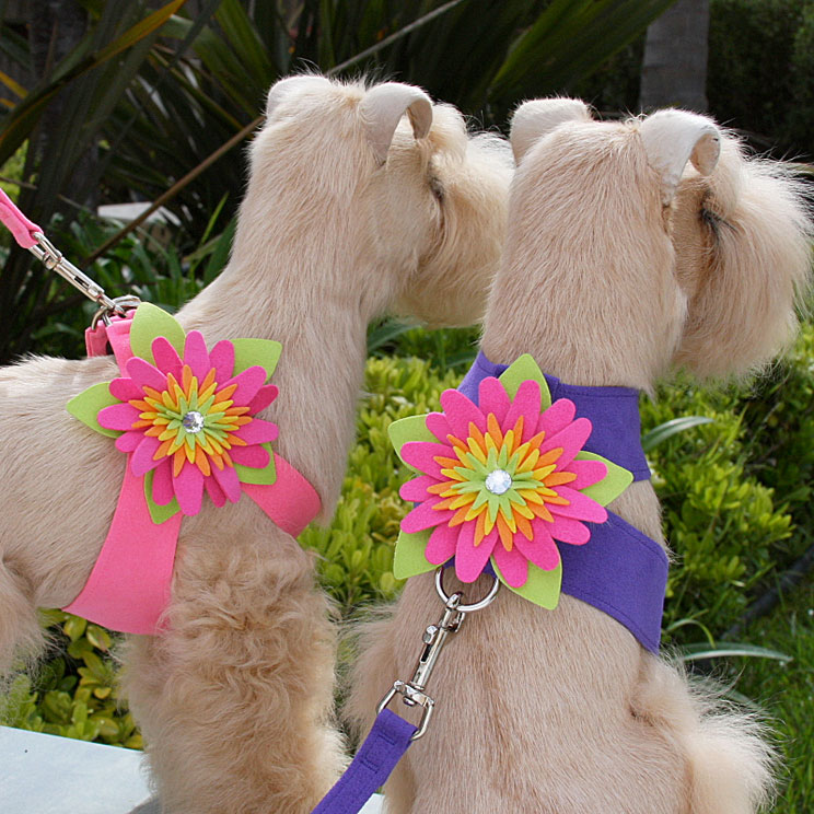 flower harnesses