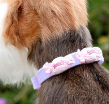 Susan Lanci Sweet Treats Dog Collar - 20 Colors