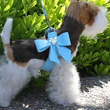 Tail Bow Swarovski Crystal Dog Harness- 20 Colors